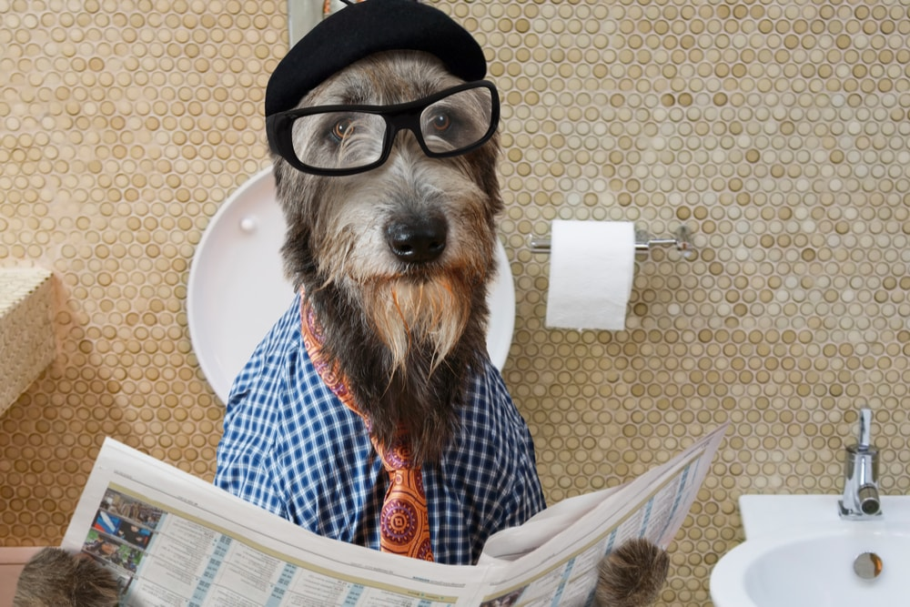 Funny image of a dog with glasses, wearing a tie and reading a newspaper.
